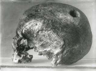Crani_Museu_Solsona